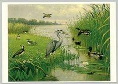 M.A. Koekkoek (1873-1944), Watervogels