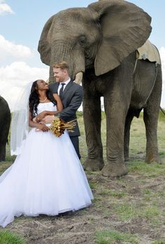 Awesome #elephant #wedding #africa #marriage #bride #groom
