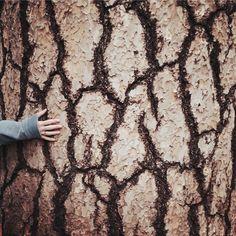 Wrzesień 2016 – Jestem w lesie Do You Feel, How Are You Feeling, Big Tree, Beautiful World, Animal Print Rug, Feelings, Nature, Instagram, The Great Outdoors