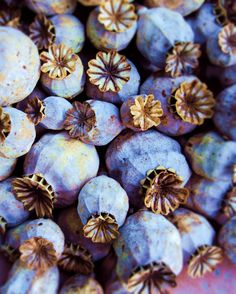 Poppy Pods in Blue by SimplySuperior on Etsy, $25.00
