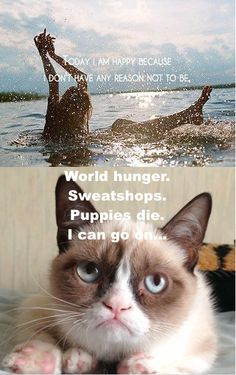 My first grumpy cat meme! I finally feel like a part of the internet! Grumpy Cat Quotes, Funny Grumpy Cat Memes, Cute Cat Memes, Cat Jokes, Funny Cats, Really Funny Pictures, Funny Animal Pictures, Animals And Pets, Funny Animals