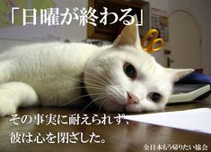 Funny Animals, Cute Animals, Book Layout, Sphynx, Cute Animal Pictures, Jokes, Kawaii, Manga, Cats