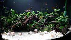 Planted Tank Anubias Garden by Brian Murphy - Aquascape Awards
