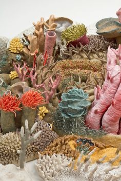 There are perhaps no creatures more fascinating than corals. Brightly coloured, anatomically clever and altogether otherworldly, you only get the opportunity to discover these strange beings on camera,...