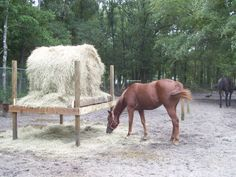 I seriously need to build something along these lines for mine.  Maybe without the posts extending above, and portable would be great.  I could put eye hooks around to hook my round bale slow feed net onto it too! Round Bale feeders - Page 2 - Horsetopia Forum