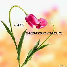 Καλό μας σ/κ σε όλους κι όλες -Καλό μήνα Μάρτιο - στην άνοιξη που έρχεται Greek Quotes, Happy Weekend, Good Morning, Plants, Wallpapers, Flowers, Buen Dia, Bonjour, Wallpaper
