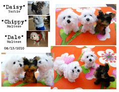 Pipe Cleaner versions of my friend's dogs. 2 Maltese and 1 Yorkie. Made of pipe cleaners Each measures approximately 1 inch high x 1.5 inches long