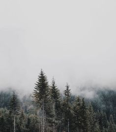 Fog in the forest Slytherin, Bella Swan Aesthetic, The 5th Wave, Dipper Pines, Tauriel, Ex Machina, The Great Outdoors, Wilderness, Nature Photography