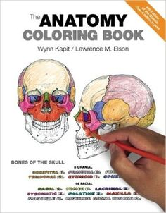 libro para colorear con diseños de anatomía