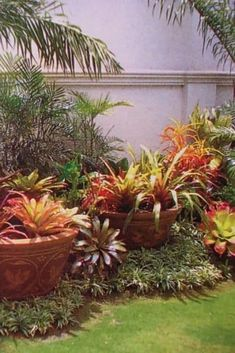 Tropical garden - using pots within landscape. What a pretty Bromeliads :) - Tropical garden – using pots within landscape. What a pretty Bromeliads :] - Balinese Garden, Bali Garden, Diy Garden, Garden Pots, Garden Projects, Diy Projects, Garden Items, Dream Garden, Florida Landscaping
