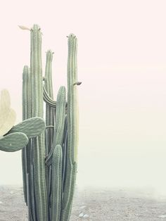 thewanderly: Cactus Love