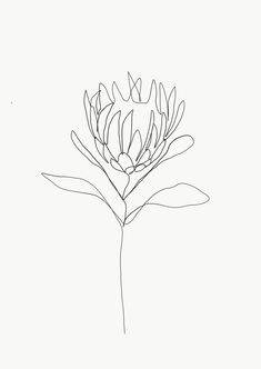One single line is used to make a delicate flower. Credit: Emma Ryan Protea single line drawing Line Drawing Tattoos, Flower Line Drawings, Botanical Line Drawing, Line Flower, Tattoo Drawings, Art Drawings, Line Drawing Art, Drawing Flowers, Art Flowers