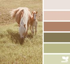 Design Seeds celebrate colors found in nature and the aesthetic of purposeful living. Scheme Color, Earthy Color Palette, Neutral Colour Palette, Colour Schemes, Color Harmony, Color Balance, Palette Design, Design Seeds, World Of Color