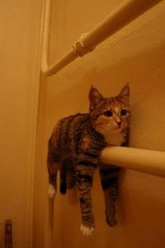 I am a towel