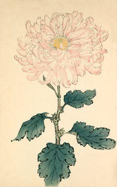 Hasegawa, Keikwa -- Usu sakura -- Chrysanthemum -- View By Flower -- RHS Prints