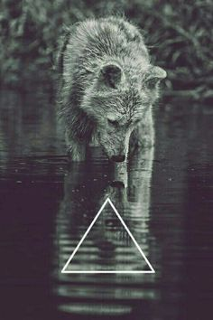 Wolf | Triangle | Hipster