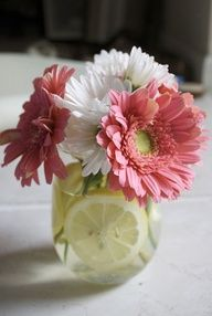 Pretty DIY Gerbera and Vero daisy wedding/shower centerpieces with floating cut lemons. Daisy Wedding Centerpieces, Bridal Shower Centerpieces, Mason Jar Centerpieces, Wedding Flowers, Wedding Decorations, Simple Centerpieces, Centerpiece Ideas, Lime Centerpiece, Gerbera Daisy Centerpiece