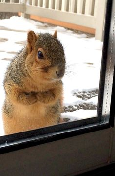 HELLO...COULD PLEASE PUT OUT THE FOOD, IT IS COLD HERE!!!