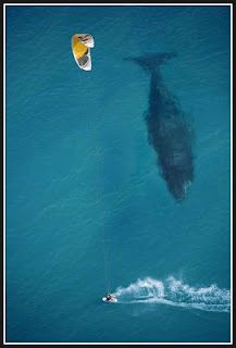 OMG!  What an awesome picture!  I wonder if that kiteboarder knew that giant lurked underneath him.?!?  I want to be in Maui!