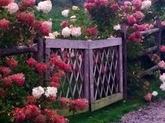 Garden gate with hydrangeas at the Stonehouse Farm, Maine