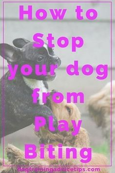 How to Stop your Dog from Play Biting - Dog Obedience Training Tips - Katzen, Hunde, Tiere Stop Puppy From Biting, Puppy Biting, Basic Dog Training, Puppy Training Tips, Potty Training, Training Dogs, Training Classes, Agility Training, Dog Agility