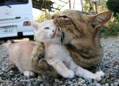 I eat you.
