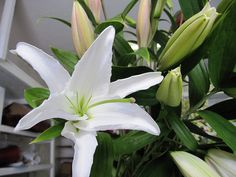 Lilies come in lots of different colors-many are bi-color and multi-colored. Some are highly fragrant.