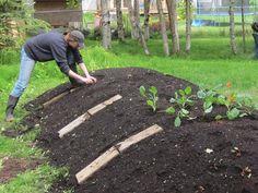 Permaculture : Les buttes de culture, une véritable révolution ! | Blog Jardin Alsagarden - Conseils de Jardinage