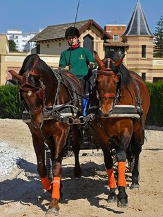 Horses in training at the Andalusian School of Equestrian Art (C)Michael Huggan Photography.
