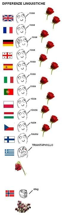 Rose in different languages. Re-pinned for you by #Europass