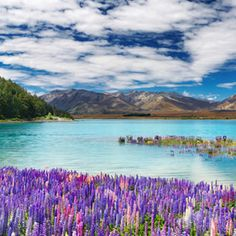 New Zealand Travel Beautiful Places What to See And Do On A New Zealand Travel Package New Zealand Travel Beautiful Places. If you are fortunate enough to book a New Zealand travel package, you wil… Dream Vacations, Vacation Spots, Vacation Travel, Travel Goals, Lonly Planet, Places To Travel, Places To See, Travel Destinations, National Parks
