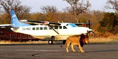 If its a Holiday in Kruger National Park in Mpumalanga or Pilanesberg Game Reserve at Sun City we will tailor-made your wildlife safari . Tanzania, Kenya, Sand Game, South Africa Safari, Wildlife Safari, Sun City, Kruger National Park, Civil Aviation, Game Reserve