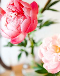 Peonies... need I say more?