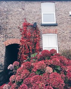 We love exteriors almost as much as interiors! How beautiful is this autumnal foliage, spotted just around the corner from our office!
