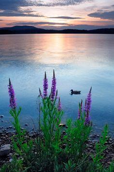 Tupper Lake, Adirondacks, NY