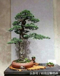 Pine Bonsai, Bonsai Art, Bonsai Garden, Garden Plants, Bonsai Trees, House Plants Decor, Plant Decor, Single Tree, Ikebana