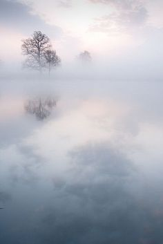 Beautiful nature mist solo tree reflection Once upon a time by Kevin Day When the mist clears, what appears?