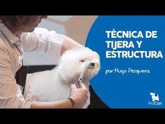 Técnica de tijera y estructura   Peluquería Canina   Arreglo y corte bichon maltes - YouTube Cortes Poodle, I Love Dogs, Puppy Love, Veterinary Medicine, Pet Life, Dog Grooming, Dog Lovers, I Shop, Dog Cat