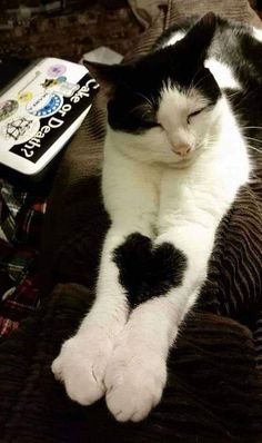 Cat Lovers Community - Your Daily Source of Cat Stories and Funny Cat Memes Cute Cats And Kittens, I Love Cats, Crazy Cats, Cool Cats, Kittens Cutest, Ragdoll Kittens, Tabby Cats, Bengal Cats, White Kittens