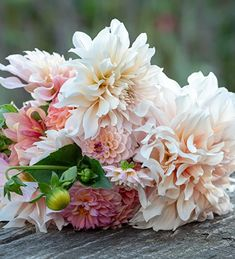 Strawberries and Cream Dahlia Collection | Sarah Raven