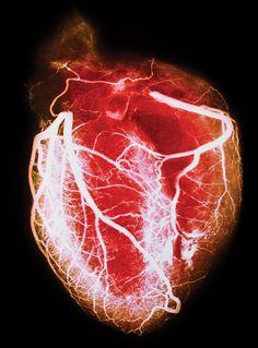 heart detail - Google Search