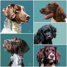 Springer Spaniel, wirehaired pointer, cocker spaniel Springer Spaniel, Cocker Spaniel, Dog Portraits, Animal Paintings, Nursery Art, Pop Art, Art Ideas, Bedrooms, Digital