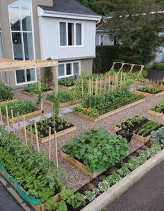 VEGETABLE GARDENING INSPIRATION. THIS YEAR'S PLANNING HAS BEGUN. | The Art of Doing StuffThe Art of Doing Stuff #creativevegetablegardeningideas #gardenplanningideaslandscapes #vegetablegardeningdesign