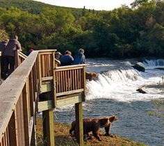 Brooks Lodge in Katmai National Park provides visitors with unsurpassed bear viewing. Definitely, a once in a lifetime trip. www.katmailand.com/index.html