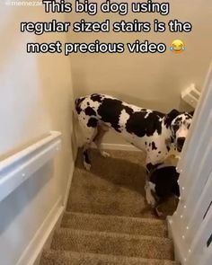 Funny Animal Jokes, Funny Animal Photos, Cute Animal Videos, Cute Animal Pictures, Really Funny Dog Videos, Super Funny Videos, Really Funny Memes, Cute Funny Dogs, Cute Funny Animals