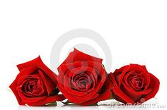 """Dreamstime - good source for stock photo. This is """"Valentines Day Rose"""" by Susabell, via"""