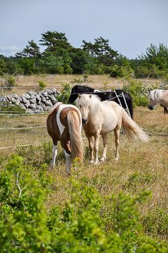 North Öland Lappland, Sweden, Semester, Mini Horses, Online Tests, Making Tools, Photography, Live, Beautiful