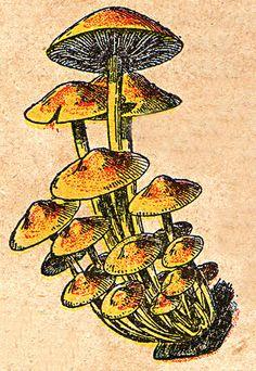 Mushroom Picture