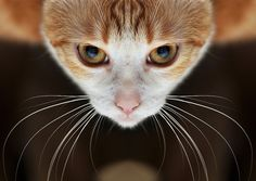 Spider cat....