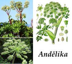 Pharmacy, Herbs, Outdoors, Health, Plants, Catalog, Outdoor, Health Care, Apothecary